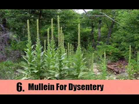 8 Herbal Remedies For Dysentery