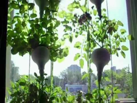 Window Farm gone crazy