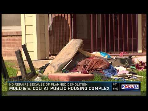 Mold, E. coli at public housing complex