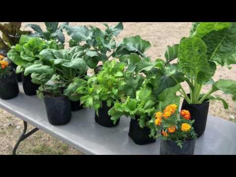 Incredible Results Growing Vegetables In 1 Gallon Root Pouch Grow Bags