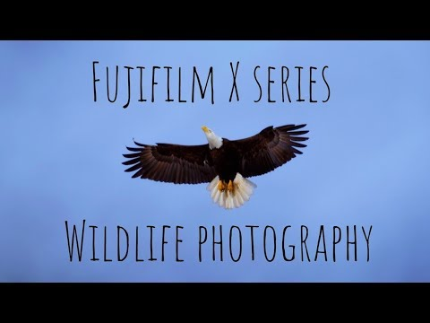 Fujifilm X Series Wildlife Photography With The X-T20 and XF 100-400mm