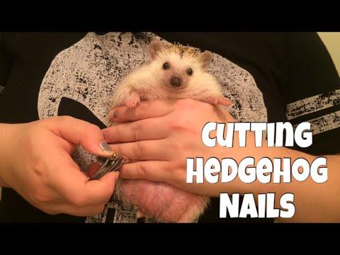 Hedgehog Care: How to Cut a Hedgehogs Nails (Smoosh Method) || feat. Draco