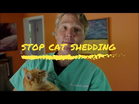 7 Steps To Stop Cat Shedding