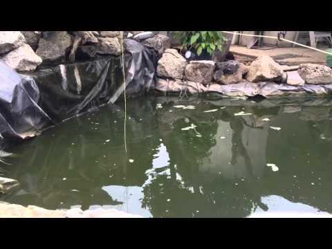 Pond fishing