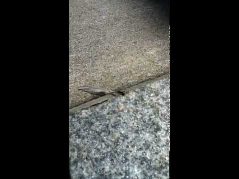 Ant Vs. Feather Vs. Wind