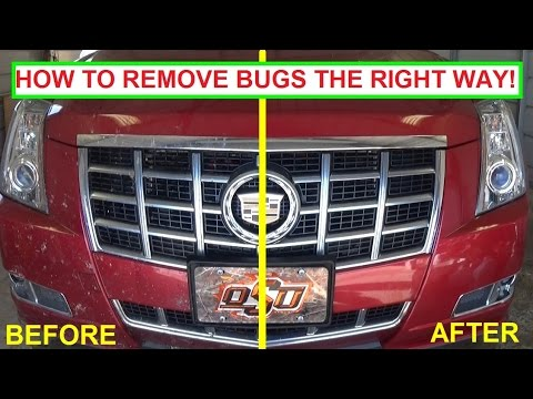 How to clean Bugs off a Car. The Right Way to clean bug guts! Easy, Guaranteed Results!