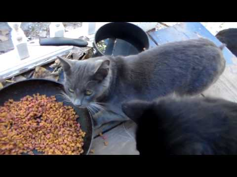 Taming a feral cat  2