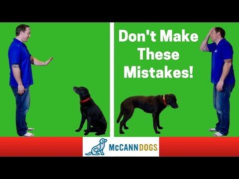 Teaching A Dog To