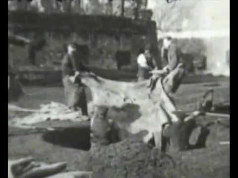 Tanning Leather / La Préparation du Cuir (1909)
