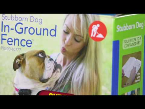 PetSafe® Before You Buy   Stubborn Dog In Ground Fence