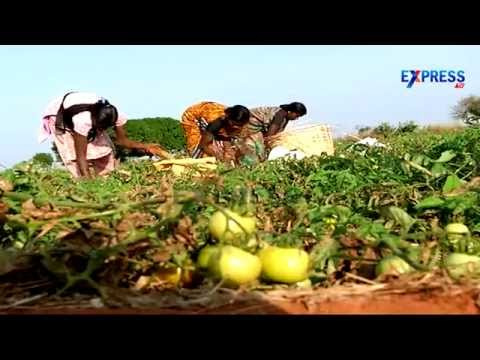 Plastic Mulch improve Crop yield in Dryland areas -  Farmers experience from Khammam - ExpressTV