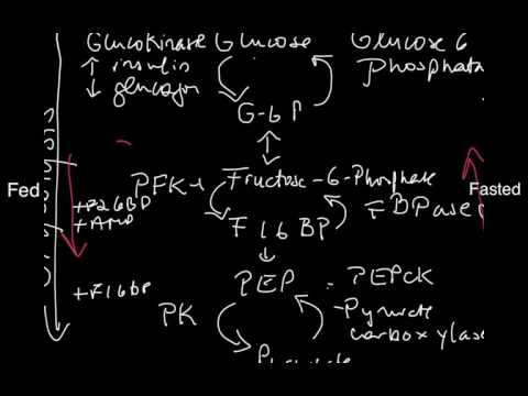 Futile Cycles in Glucose Metabolism
