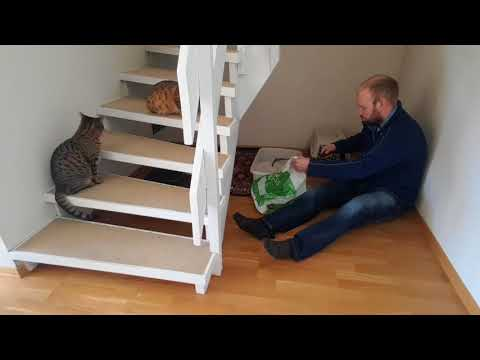 Cat poop