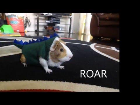 DIY Guinea Pig Dinosaur Outfit