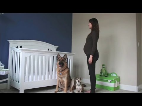 Dogs Steal the Show in Heartwarming Pregnancy Time Lapse Video
