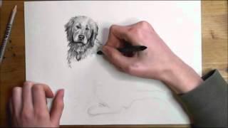 hund bleistift zeichnung online zeichnen lernen music jinni. Black Bedroom Furniture Sets. Home Design Ideas