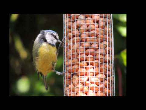 Bill Oddie says feed the birds this summer