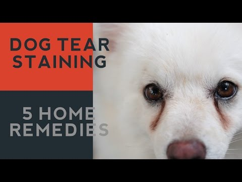 Tear Staining in Dogs: 5 Natural Answers