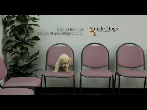Guide Dogs Interviews TV Ad