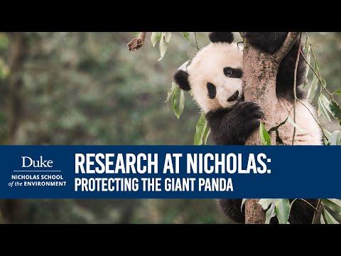 Research @ Nicholas: Stuart Pimm - Protecting the Giant Panda
