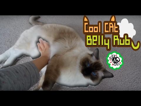 Cool Cat Belly Rub.