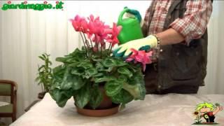 fornire concime alle piante