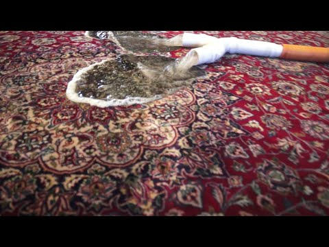 How we remove cat urine from area carpet