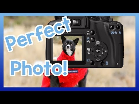 How to Take the Perfect Picture of Your Dog! 7 Tips to Get the Perfect Snap of Your Pooch!