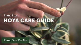 Ep 112. Hoya Care & Propagation