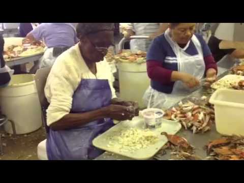 J.M Clayton Crab Picking
