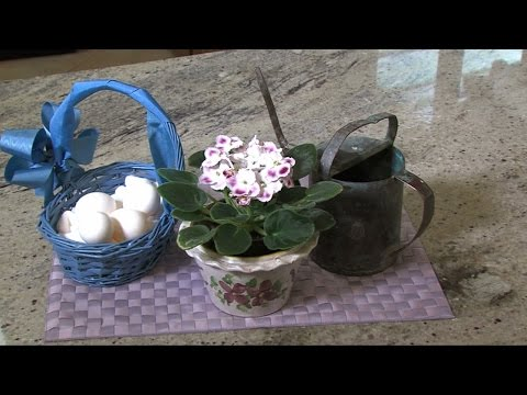 Watering African Violets
