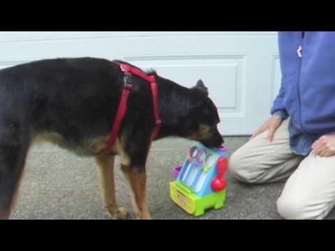 Service Dog Retrieve promo video