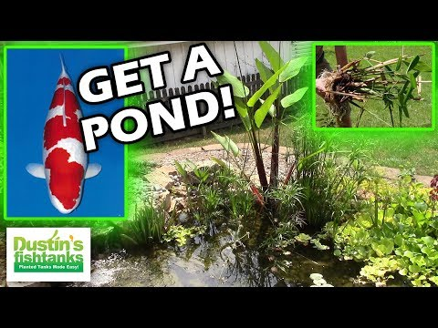 WATER GARDENS - Top 5 Reasons to get a Garden Pond!