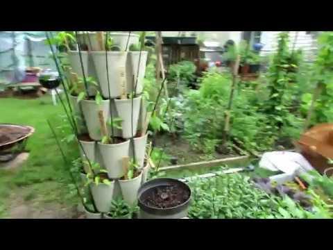 Vegetable Garden Tour & Tips 5/25/18: Lush Tomato Growth, Spraying Schedule, Buy Damaged Flowers