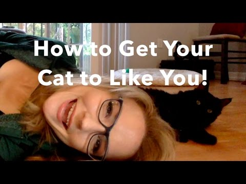 How to Get Your Cat to Like You!
