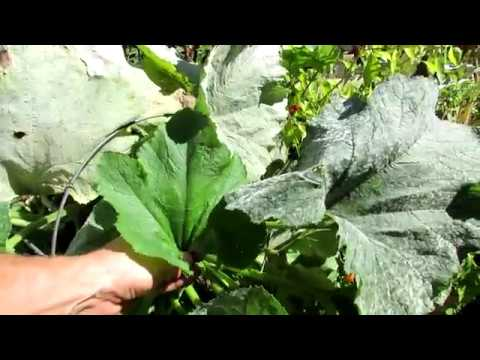 Identifying Powder Mildew, Treatment Options and Prevention: Keep A Journal of Pests and Diseases