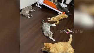 Hilarioius moment pet cats jump when owner sneezes