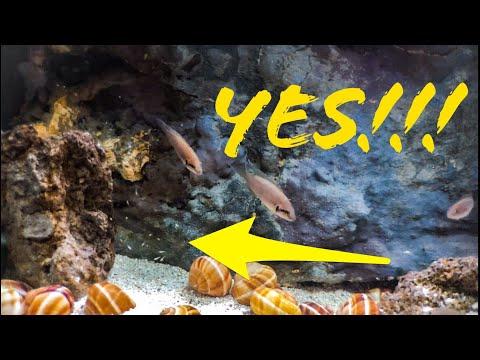How To Know You Have a Balanced Aquarium