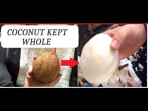 How to open coconut and keep in one piece whole