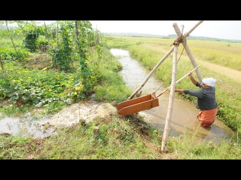 Irrigation Without Electricity in Vegetable farm.