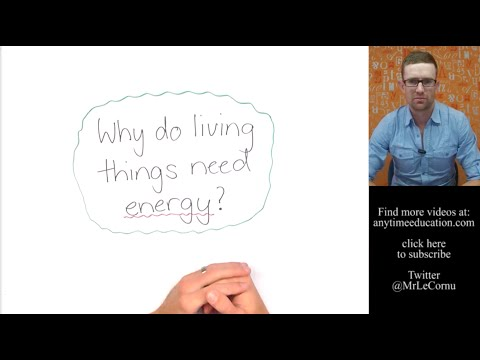 Why Do Living Things Need Energy?