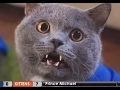 Prince Michael  Funnyvines - New Aarons Animals Video Compilation 2017 mp3