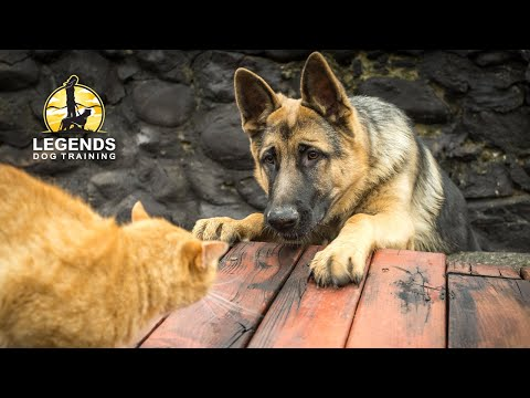 Dog and Cat Socialization: Training for Hyper-Excited Dogs