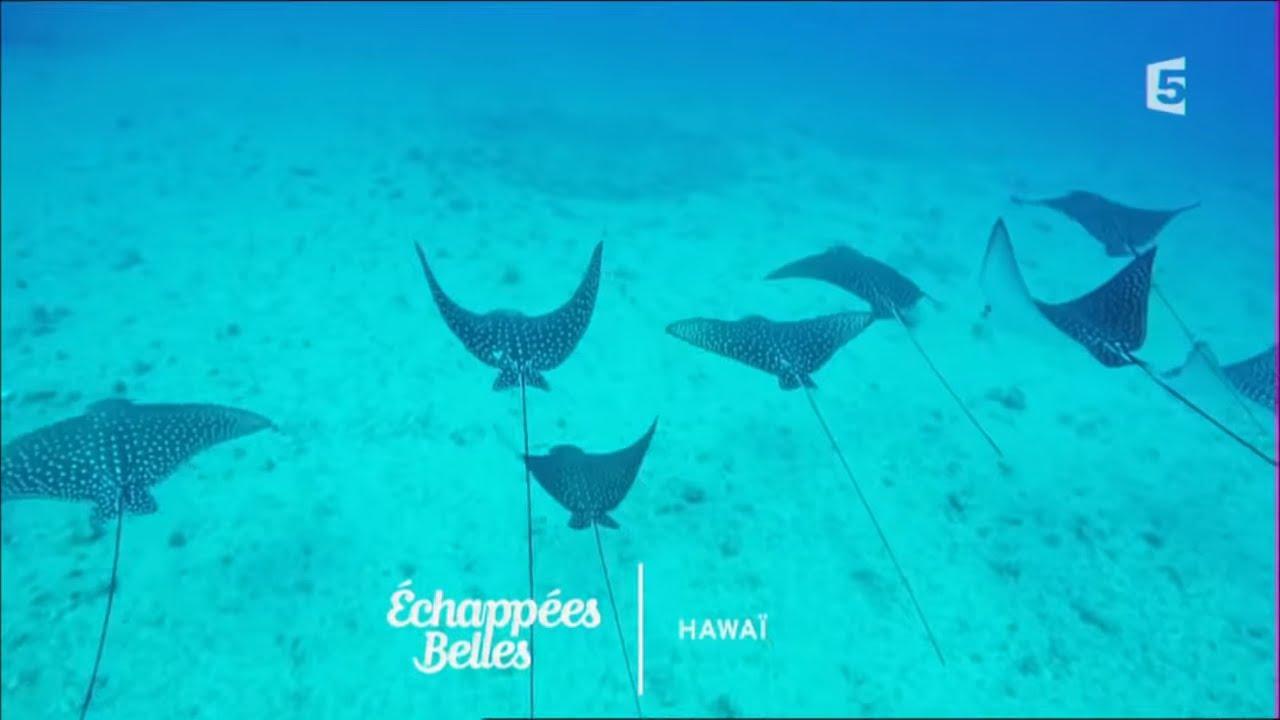Hawaï l'autre rêve américain - Echappées belles