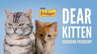 Dear Kitten: Regarding Friendship