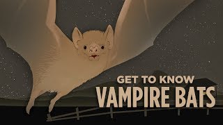 vampire bats bloodthirsty and cuddly skunk bear