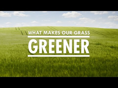 What Makes Our Grass Greener