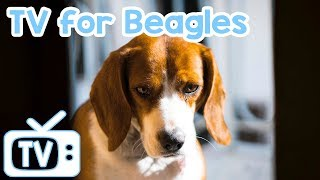 Dog Music & Tv! Tv For Beagle Dogs! Tv With Relaxing Music For Beagles!