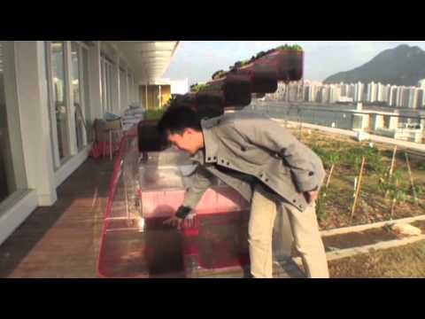 Hong Kong Residents Help Create Green Roofs