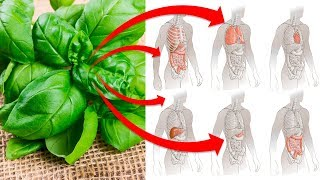 Eat This Herb To Improve Your Mood and Memory, Regulate Blood Pressure, Boost Immunity and More!